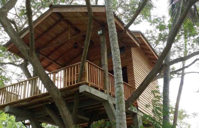 TREE HOUSE SUPERIOR ROOM 01